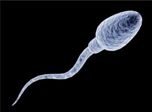 spermacel11