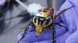 cyborg-beetle